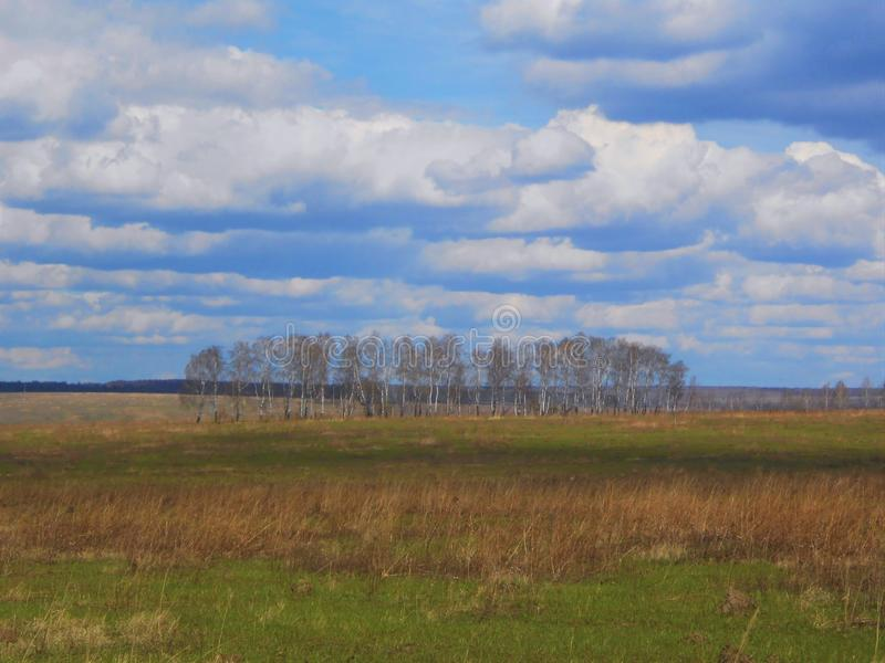 Spring landscape in the field with birches and clouds. Landscape in start of the spring in field with young and dry grass and plants and group of birches on the royalty free stock image