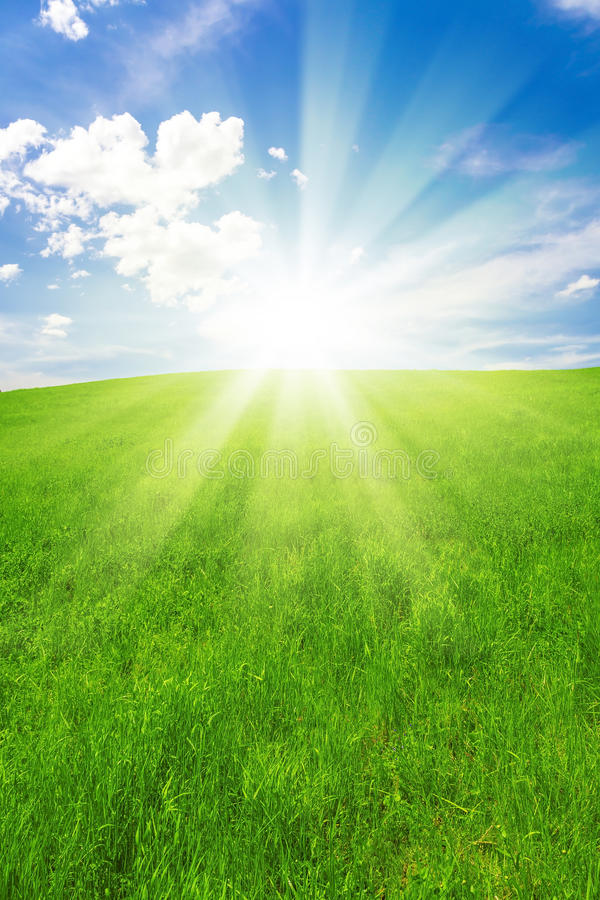 Spring landscape, field and blue sky royalty free stock image