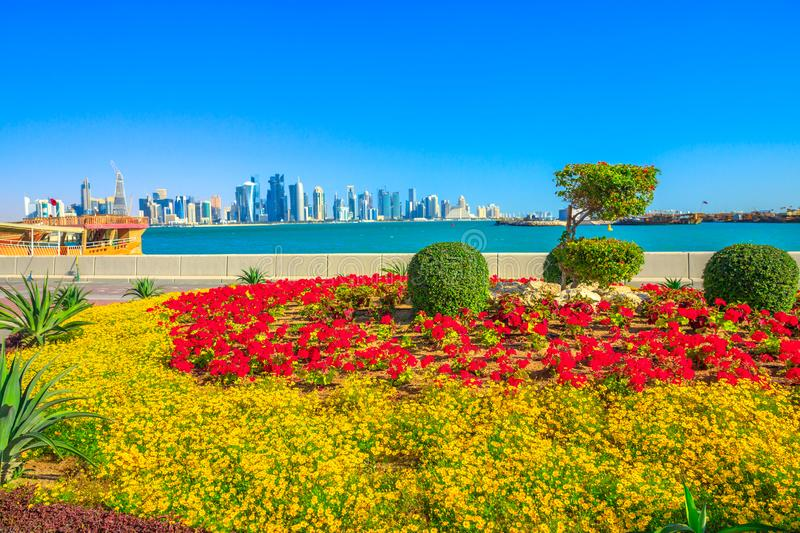 Doha Bay in spring. Spring landscape of flower beds and blooming trees on Corniche promenade of Doha Bay in Qatar. Tall skyscrapers of Doha Downtown skyline on royalty free stock image