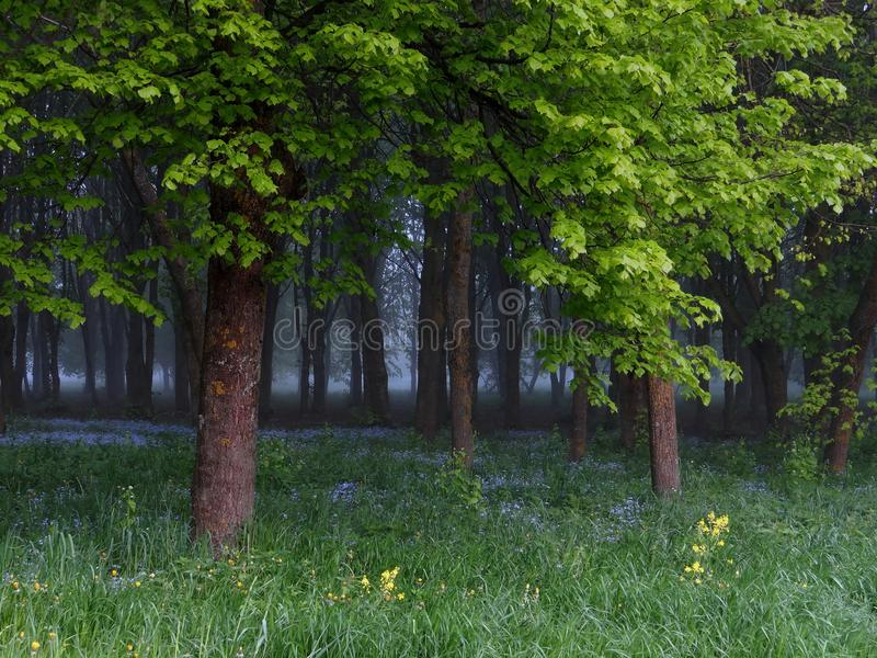Spring landscape . Foggy forest stock photo