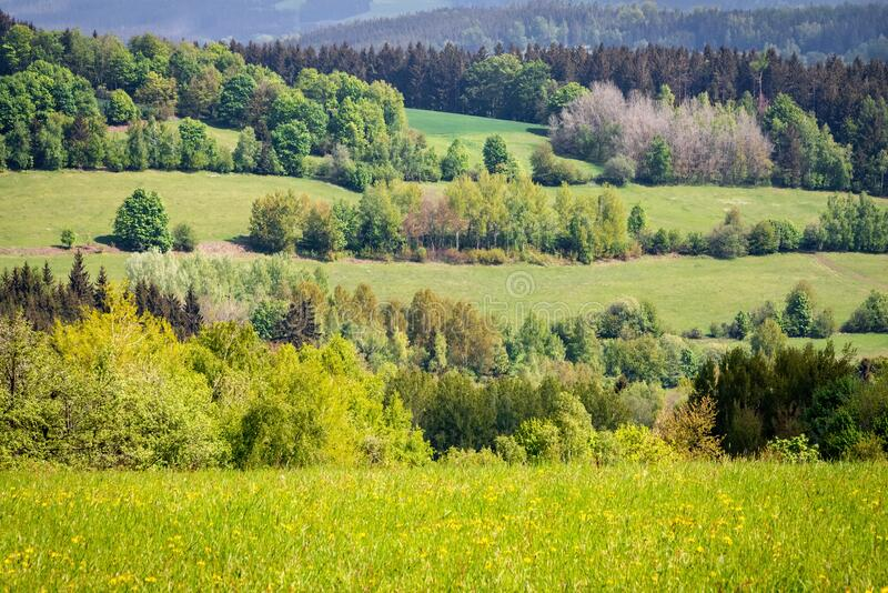 Spring landscape with green meadows and trees stock images