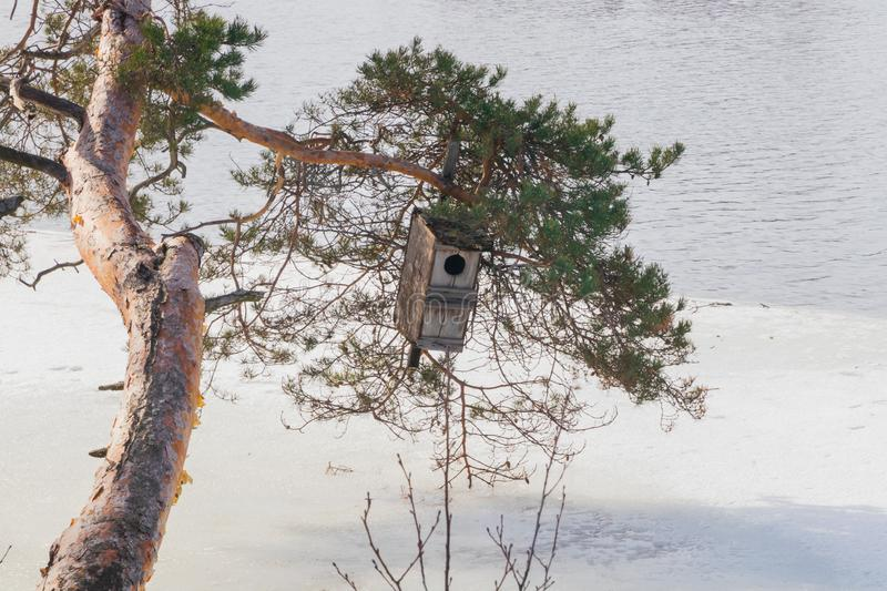 Spring landscape of Kymijoki river waters in ice and nesting box on a tree, Finland, Kymenlaakso, Kouvola royalty free stock photo