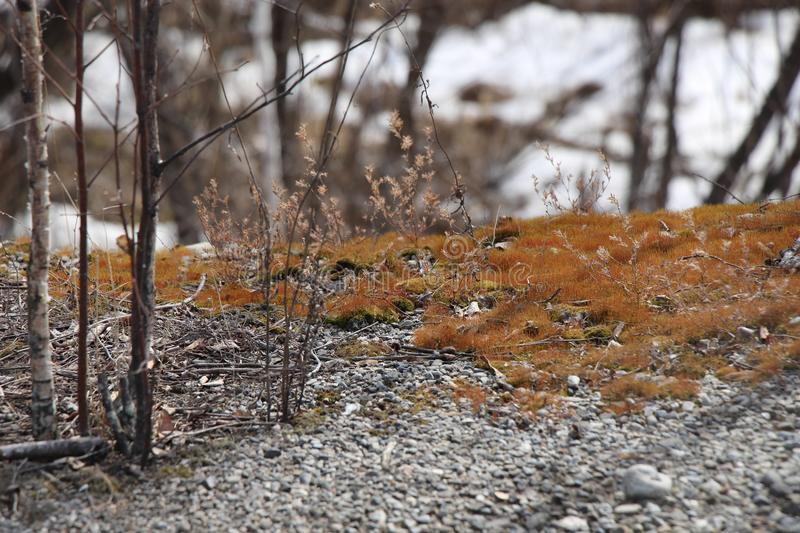 Spring landscape / Macro photography in the forest. / moss on the rocks stock photography