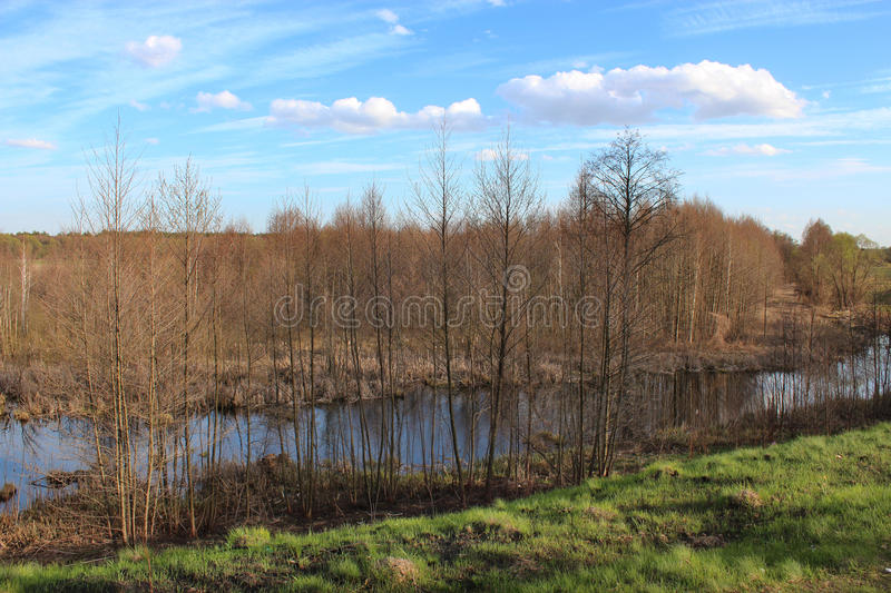 Spring landscape with many branch of alders and pond royalty free stock photography