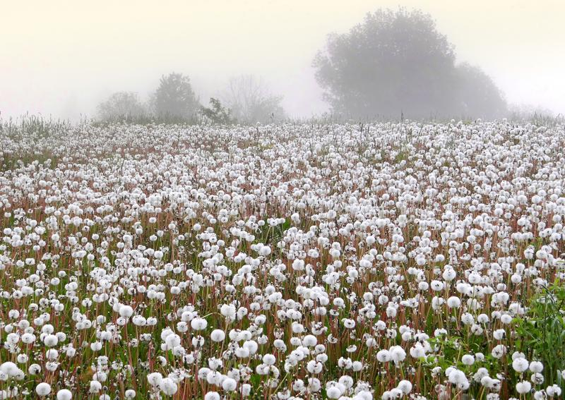 Spring meadow. Misty morning in Lithuania. stock photography
