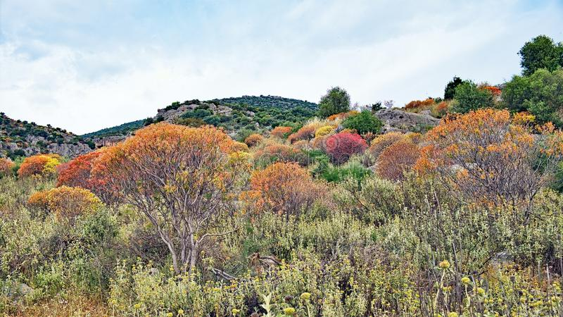 Multi Coloured Greek Rural Spring Landscape, Greece. A Spring landscape with multi coloured shrubs, trees and grass, Greece. The colours are more typical of royalty free stock photography
