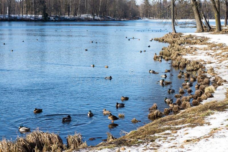 Spring landscape natural park or reserve stock images