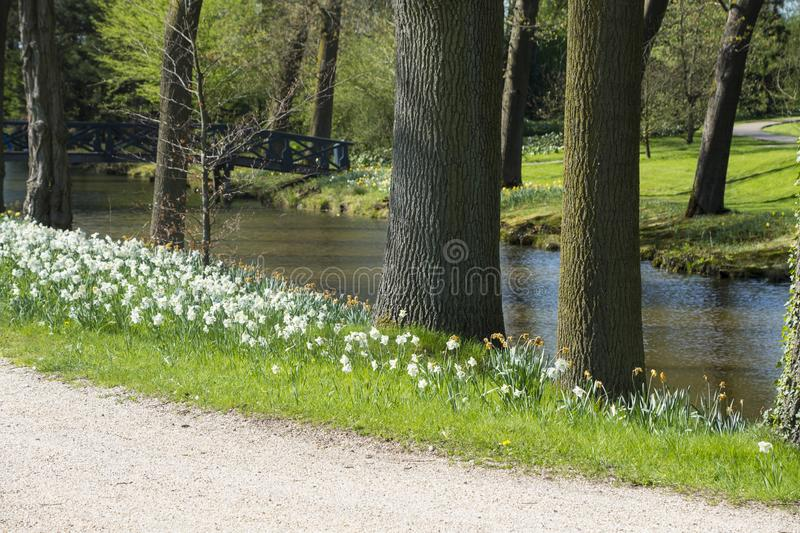 Spring landscape. Park way with flowering flowers on meadow. Daffodils at the river stock images