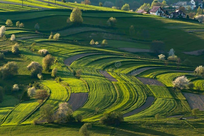 Spring landscape in Polana region royalty free stock photos