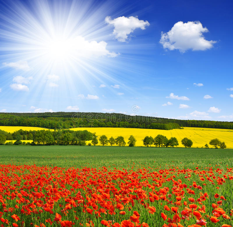Download Spring Landscape With Poppy Field Stock Image - Image: 41896561