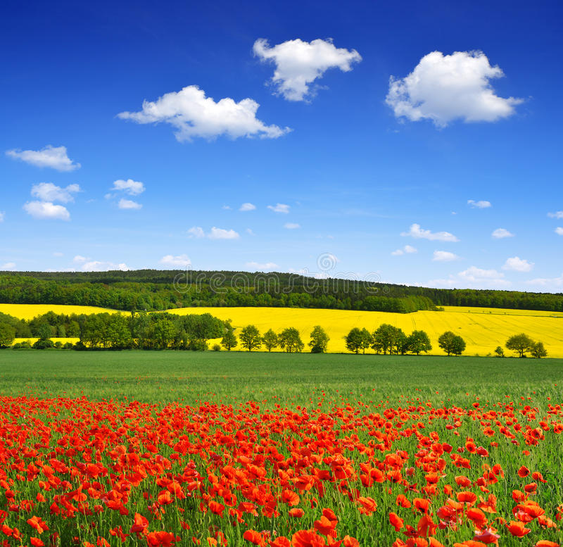 Download Spring landscape stock photo. Image of clear, meadow - 38802138