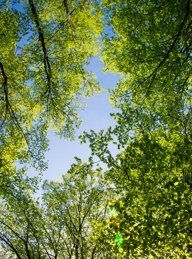 Spring landscape of trees royalty free stock photography