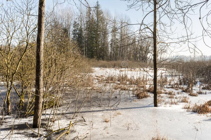 Spring landscape with trees and thawed on the river bank. Spring flood in the wild forest, with the trees reflecting in the water. Melting snow and ice on the royalty free stock photo