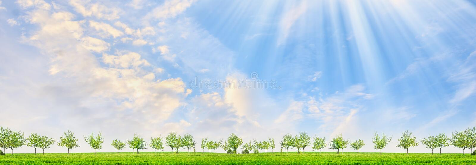 Spring landscape with young trees and sun rays on blue sky background. Panorama stock photography
