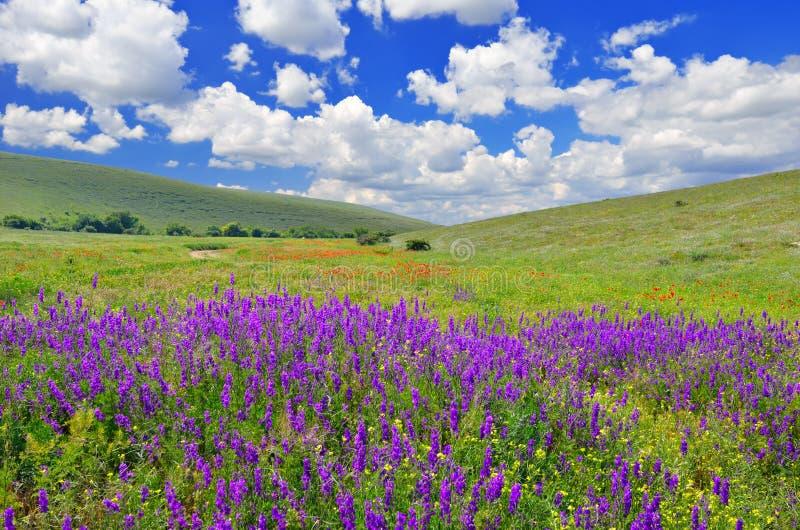 Spring landskap arkivfoto