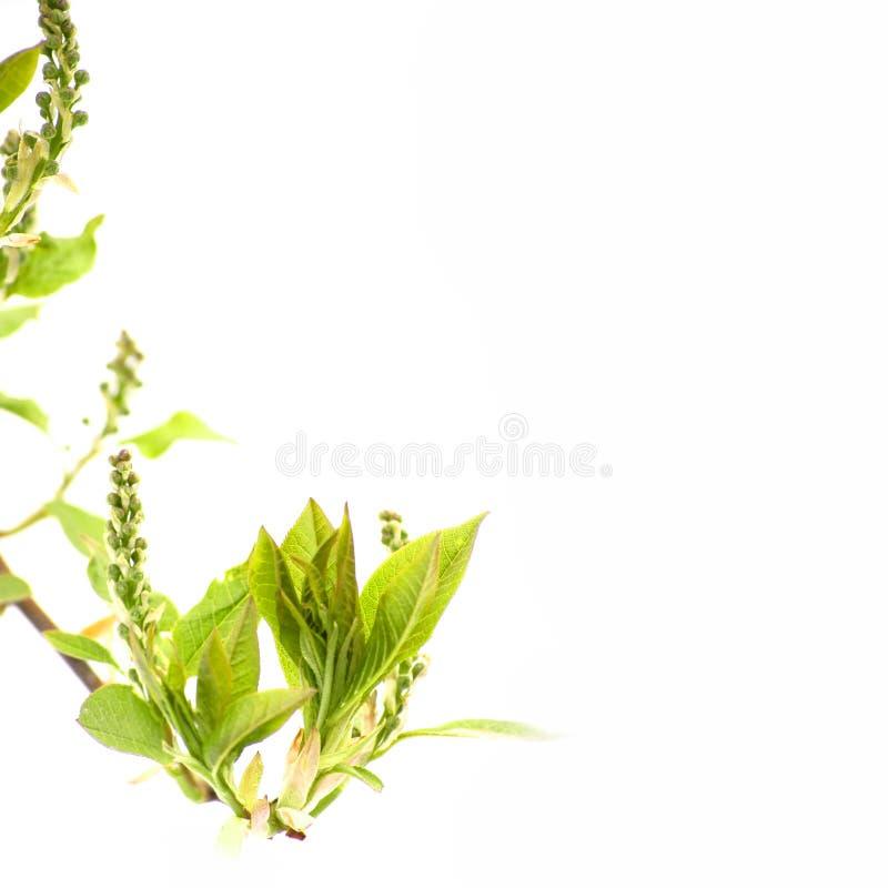Download Spring Leaf stock image. Image of fresh, flora, plant - 5061143