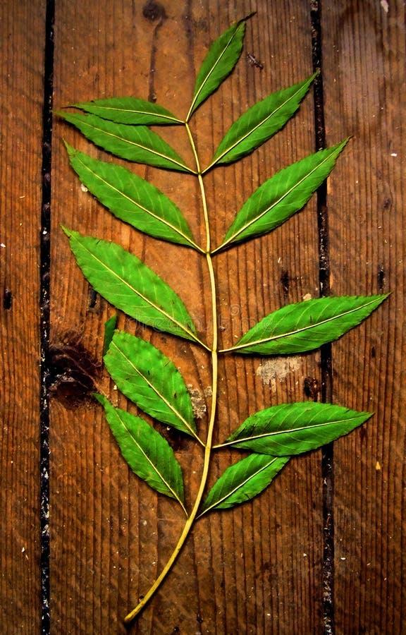 Spring Leaf stock image