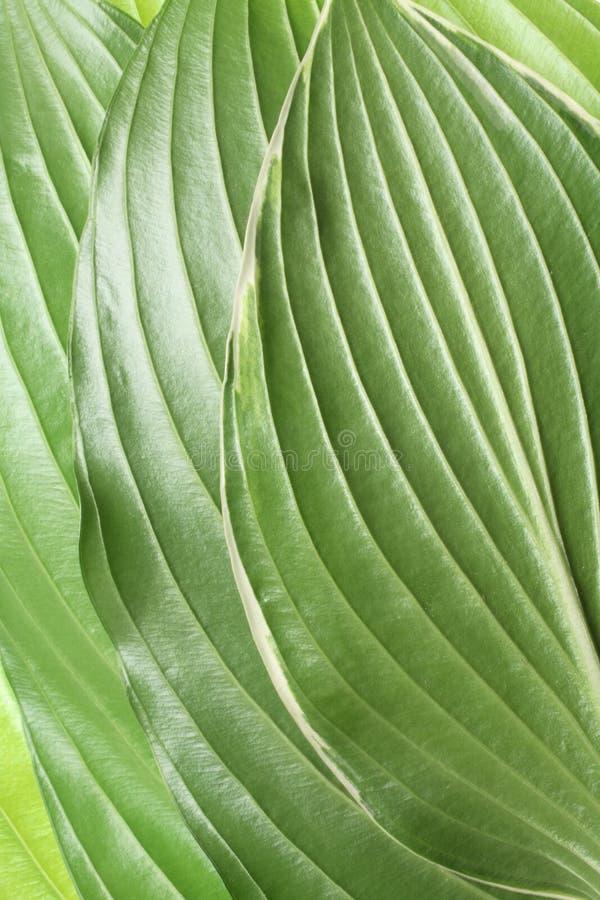 Download Spring leaf pattern stock image. Image of beginnings, detail - 3924159