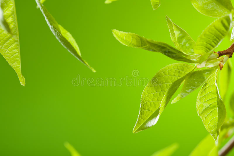 Download Spring leaves stock photo. Image of nature, sunny, twig - 19607480