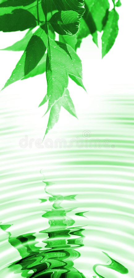 Download Spring leaves stock image. Image of growth, branch, abstract - 5148275