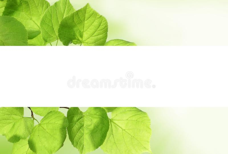 Spring leaves border with white empty copy space background.  royalty free illustration