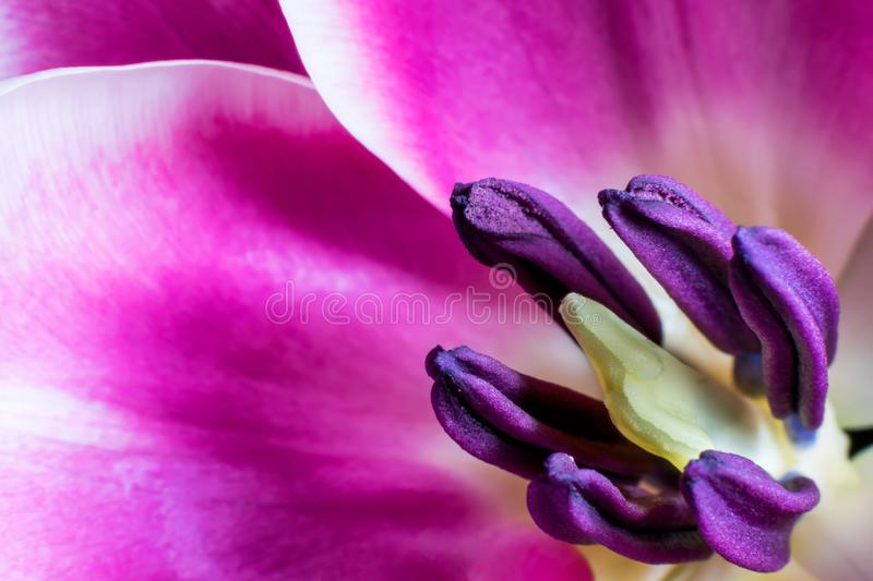 A detailed macro of a flower. Natural light macro of a flower in the springtime showing the small details stock photo
