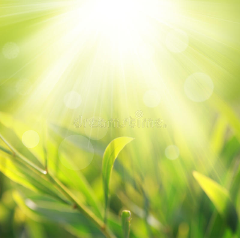 Download Spring Light Background Royalty Free Stock Photo - Image: 20136485