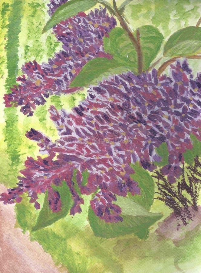 Spring lilac. Куст сирени. stock image