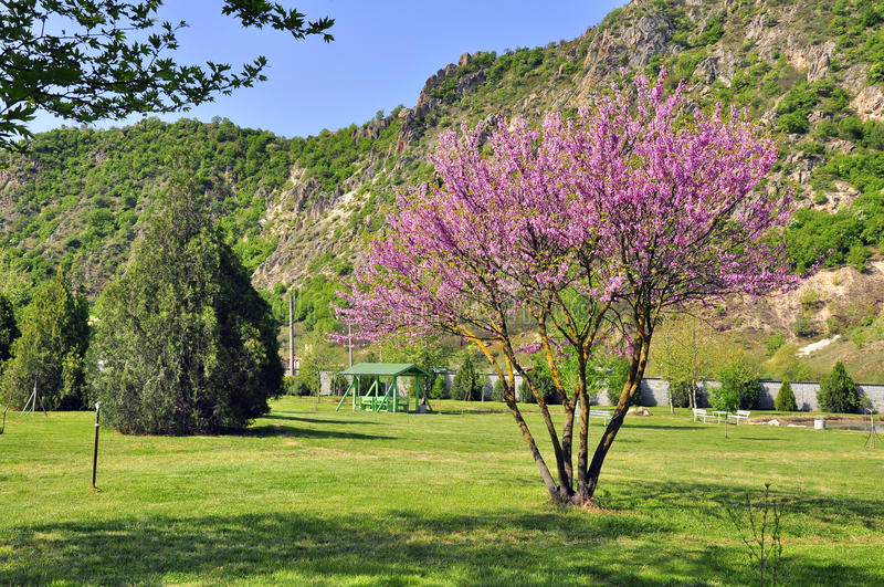 Spring lilac park. Near mountain in a sunny day royalty free stock images