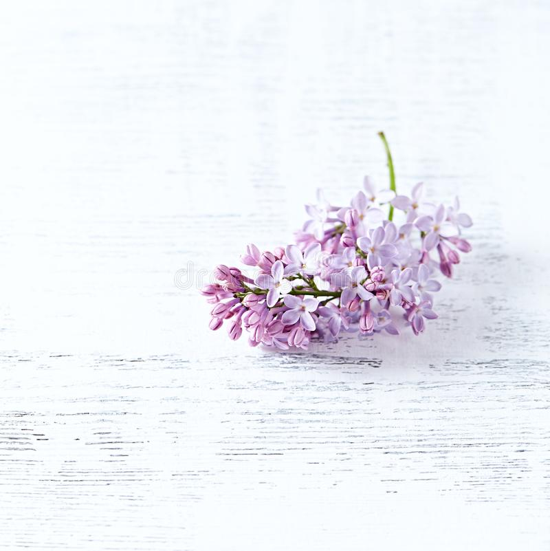 Spring Lilac on Wooden Background royalty free stock photos