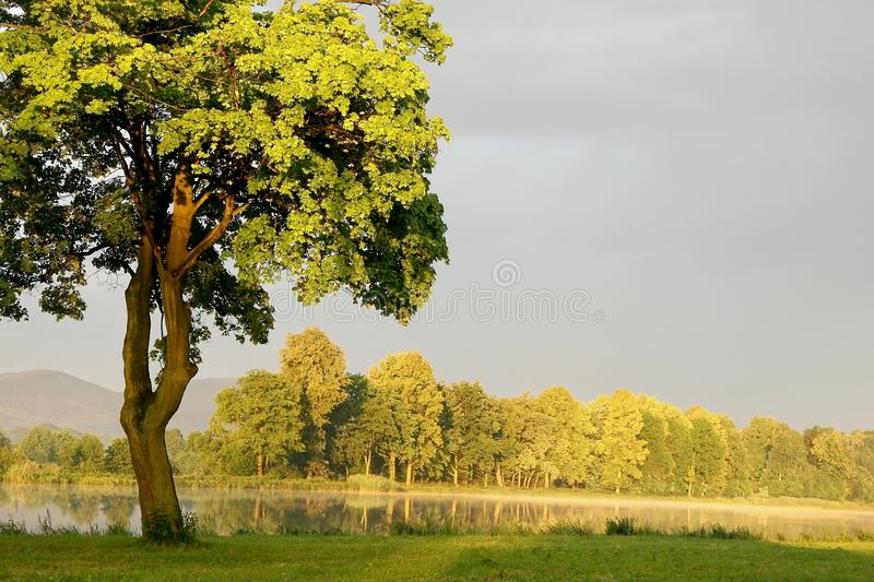 Spring Maple Tree On The Shore Of The Lake Royalty Free Stock Photos