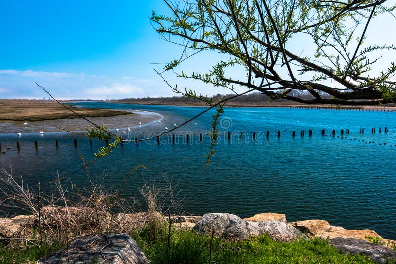Spring in Marine Park. Brooklyn, NY royalty free stock photo