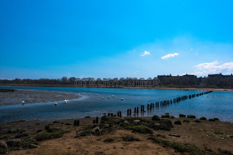 Spring in Marine Park. Brooklyn, NY royalty free stock photography
