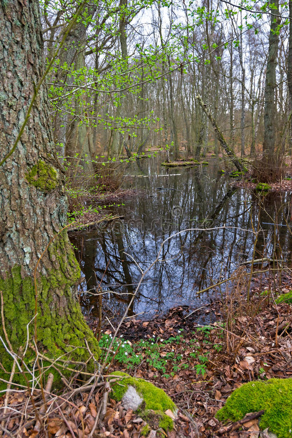 Download Spring Marsh In Vertical View Stock Photo - Image: 39811686