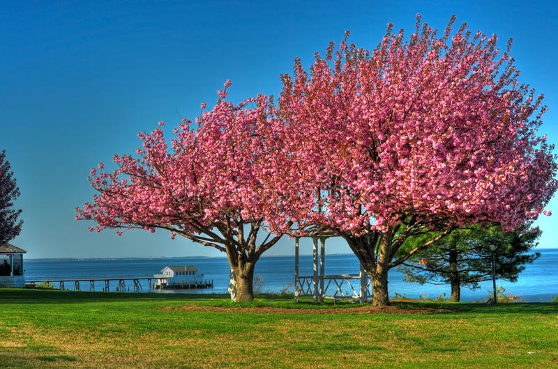 Spring in Maryland stock image