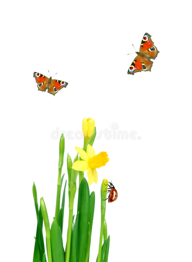 Download Spring meadow stock photo. Image of growth, flower, horizontal - 13072728