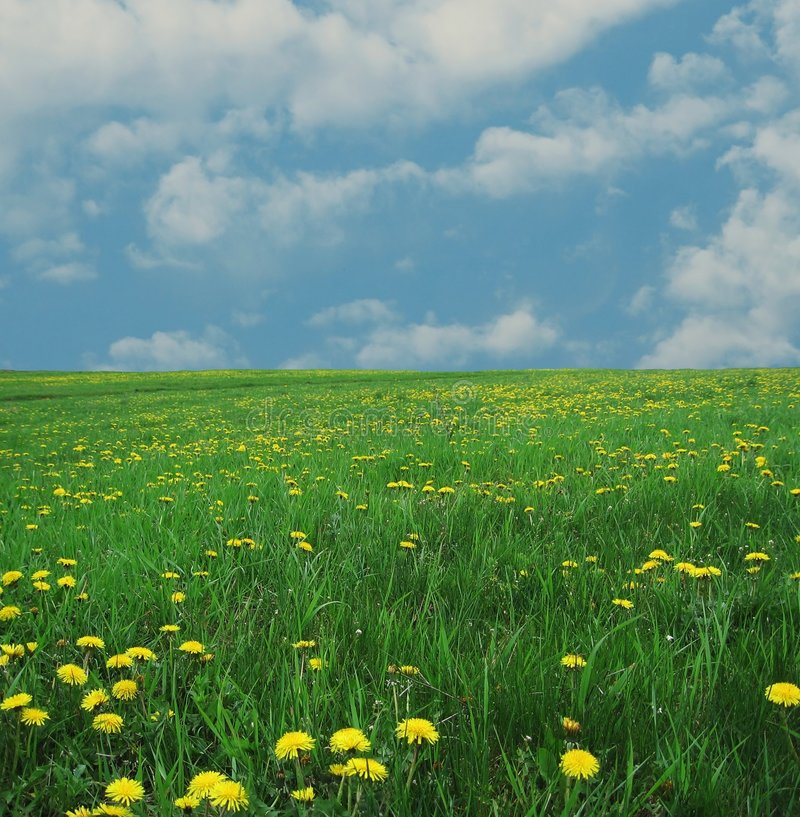 Free Spring Meadow Royalty Free Stock Photography - 1667317