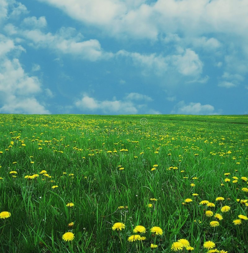 Free Spring Meadow Stock Image - 2262111