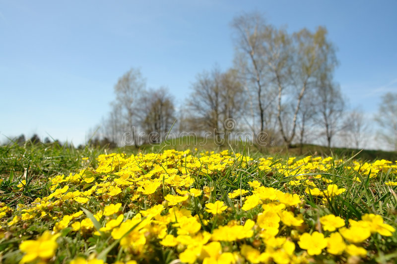 Download Spring meadow stock image. Image of landscape, spring - 2267703