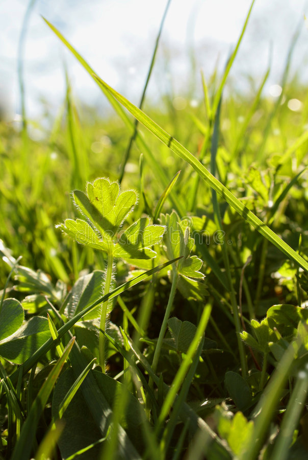 Spring-meadow stock photography
