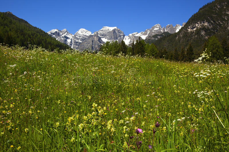 Spring Meadow In The Alps Royalty Free Stock Photos