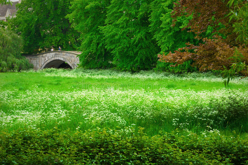 Spring meadow in Cambridge royalty free stock photo