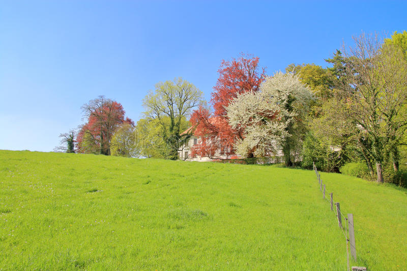 Spring meadow in front of the house. stock photos