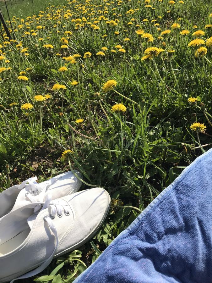 Spring meadow with green grass and yellow dandelions. There is a rug for rest, white sneakers stand nearby stock images