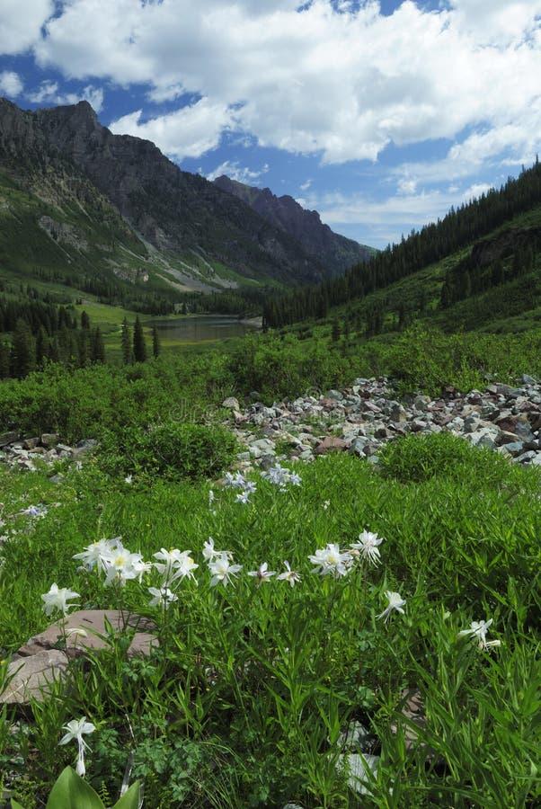 Spring meadow near Maroon Bells in Colorado stock images