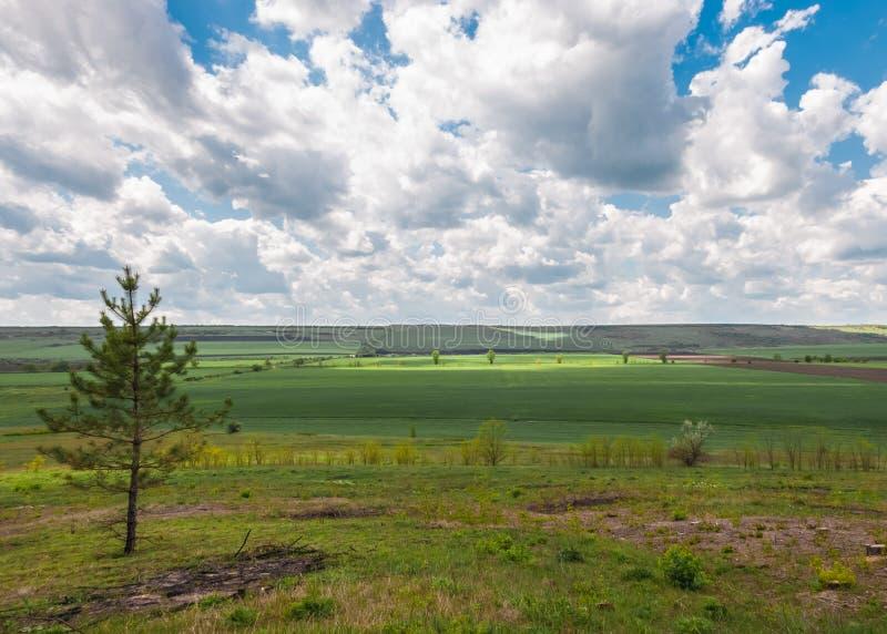 Spring Meadows stock photo