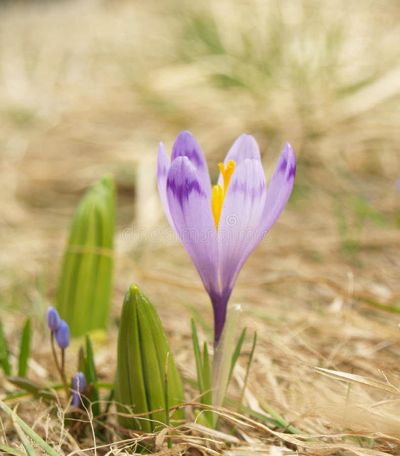 Spring messager royalty free stock photo