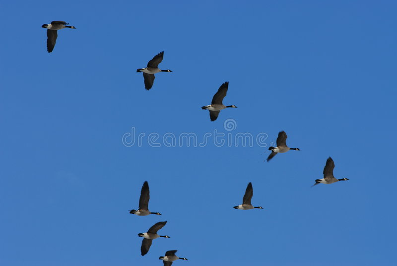 Spring Migration Stock Photo