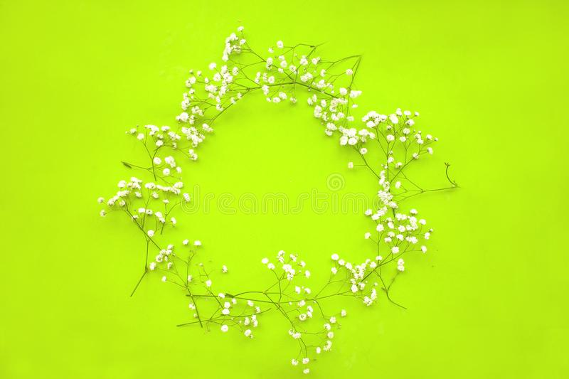 Spring minimalistic background with a wreath of delicate white flowers gypsophila on a green background. royalty free stock photo
