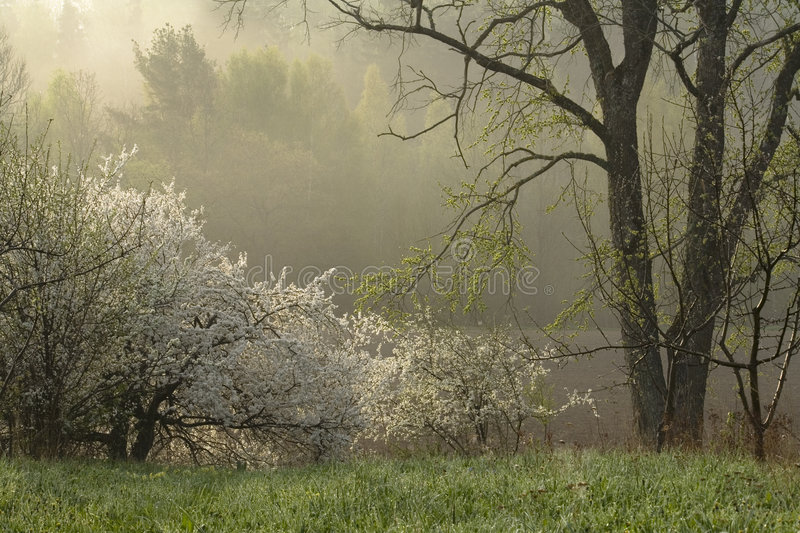 Spring morning royalty free stock images
